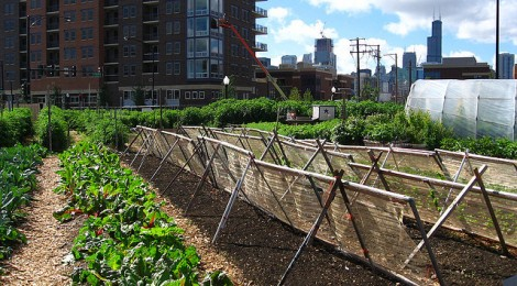 Urban agriculture and behavior change