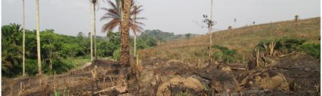 Ebola and sustainability