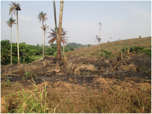The area known as the Guinea Forest Region, now largely deforested because of logging and clearing and burning of the land for agriculture. Photo credit: Daniel Bausch. Used under a Creative Commons License