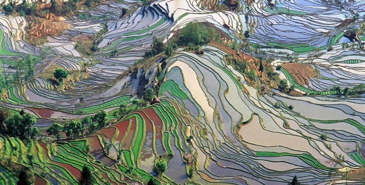 """""""Terrace field yunnan china denoised"""" by Jialiang Gao, www.peace-on-earth.org - Original Photograph. Licensed under Creative Commons Attribution-Share Alike 3.0 via Wikimedia Commons - http://commons.wikimedia.org/wiki/File:Terrace_field_yunnan_china_denoised.jpg#mediaviewer/File:Terrace_field_yunnan_china_denoised.jpg"""