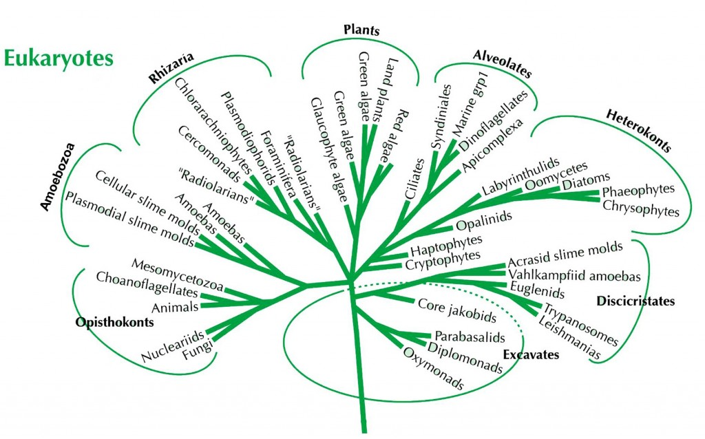tree of eukaryotes complete