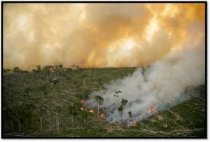 amazon-deforestation-greenpeace