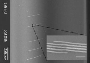 Tang07 Nanotechnology Fig6