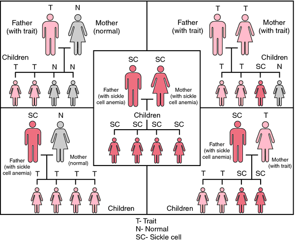 FIGURE 1 uses full body pictographs, shades of red to depict the status of the body, and compares the probability various other combinations. Source: Miller-Keane Encyclopedia and Dictionary of Medicine, Nursing, and Allied Health, Seventh Edition. © 2003 by Saunders, an imprint of Elsevier, Inc. All rights reserved.